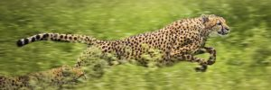 Benchmarking mainframes with cheetah image2